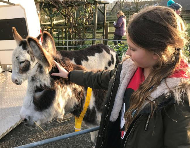 Enjoy a trio of Christmas events at The Donkey Sanctuary
