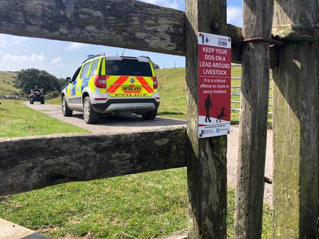 29 sheep and a ram have been stolen     Picture: Dorset Police Rural Crime Team