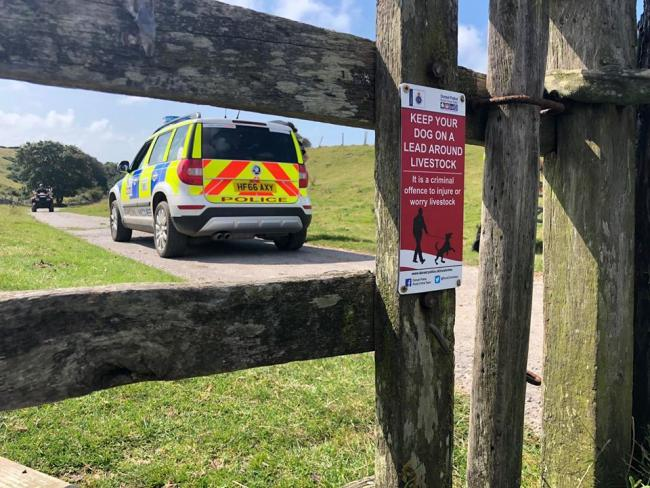 Sheep have been stolen from a field near Powerstock, Bridport Picture: Dorset Police Rural Crime Team