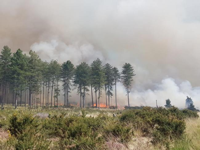 Police are appealing for witnesses to come forward in relation to a major fire at Wareham Forest Picture: DW Fire & Rescue Service