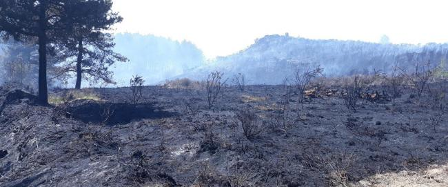 The damage caused by the blaze at Wareham Forest  Picture: Forestry England