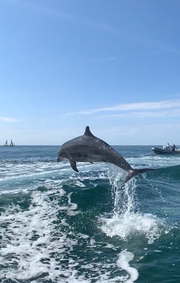 Keep your distance: Warning to boat owners after dolphins 'harassed' in bay