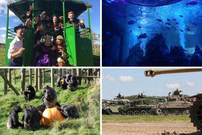 There's plenty to see and do during half term in Dorset and beyond despite the Covid-19 restrictions.