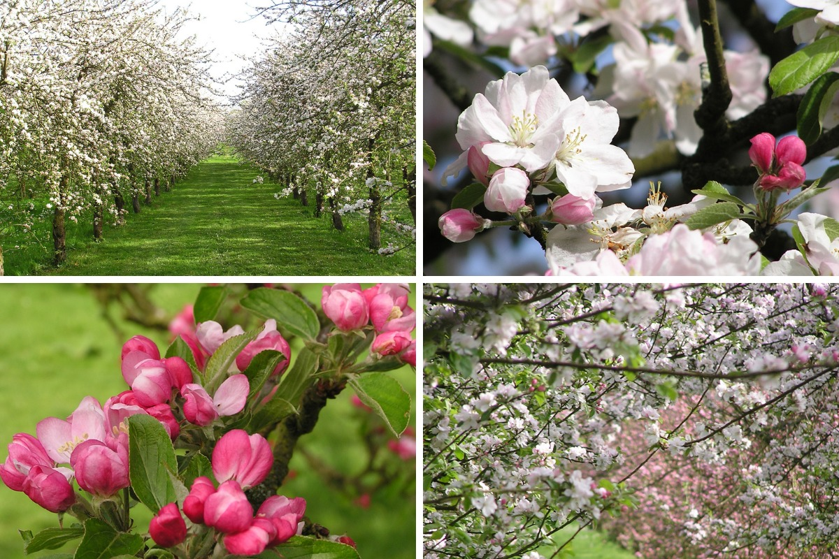 Residents invited to Dorset Nectar Cider Farm orchard
