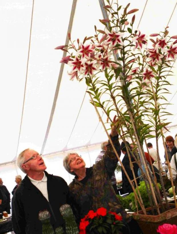 Visitors to last year's show admire Ashley Ball's first-prize flowering plant in pot