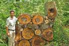 HOME SWEET HOME: The Bug Hotel at Abbotsbury Swannery with its creator Charlie Wheeler