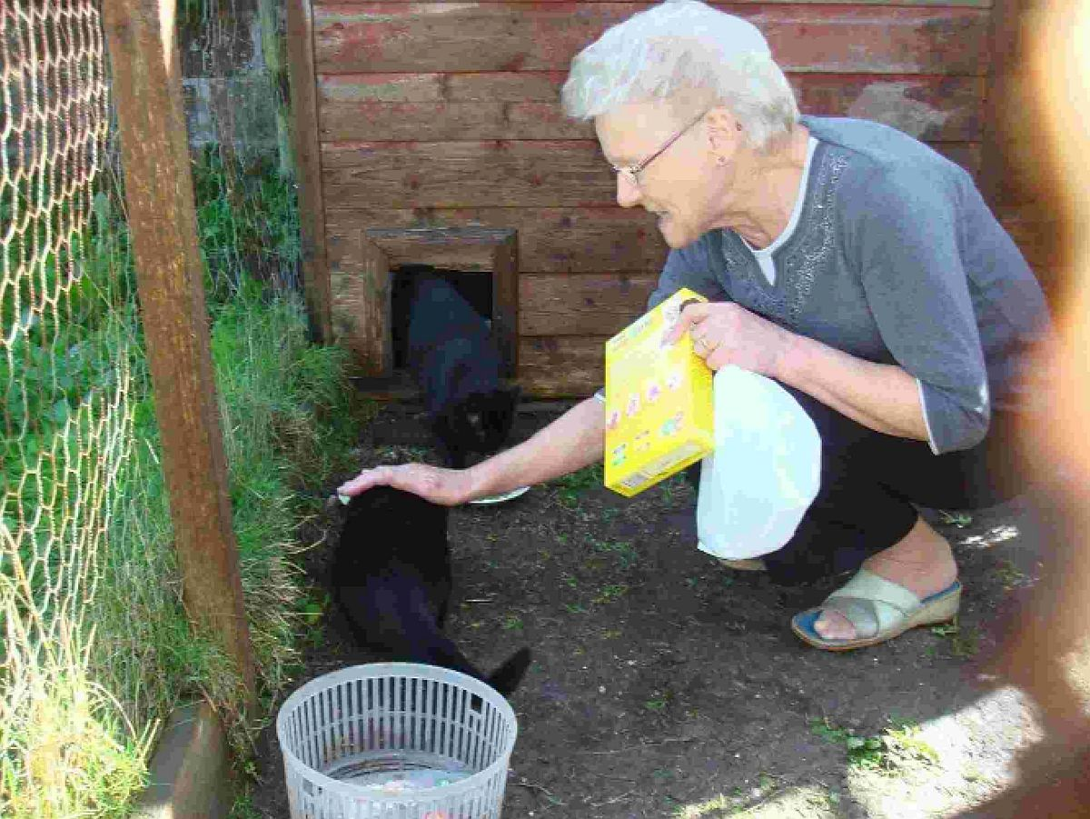 NOWHERE TO GO: Feral cat George, also inset, with foster carer Pat Aplin