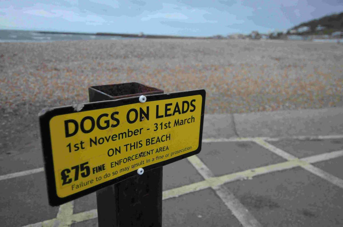 Lyme Regis Town Council to review dogs on beach policy after 'demonisation' claims