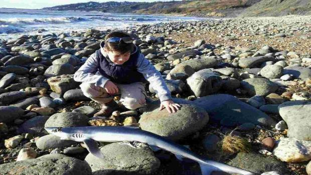 Boy discovers shark washed up on Charmouth Beach