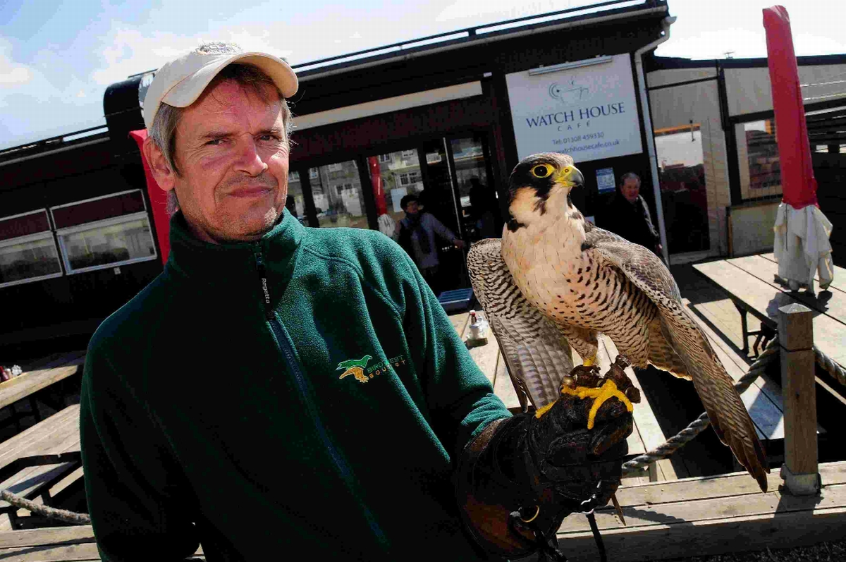 DETERRENT: Falconer Fin Parker with his hybrid falcon Dizzy at the Watch House Cafe