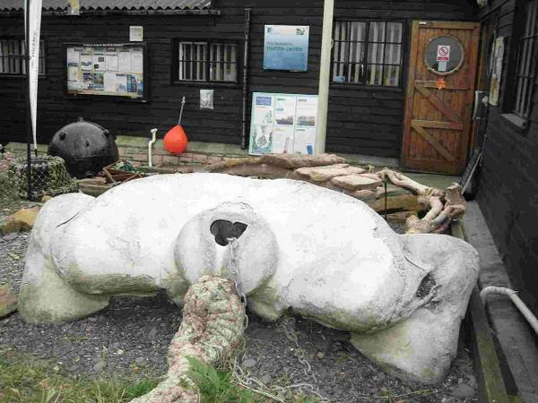 Monster whale skull helping marine giants