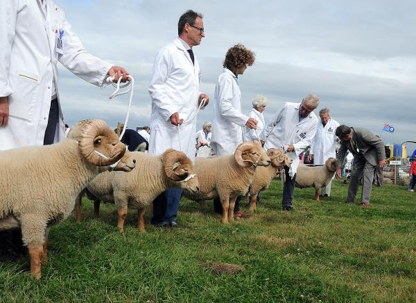 Bumper crowds flock to Melplash Show