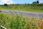 Bridport Town Council looks set to cut the verges