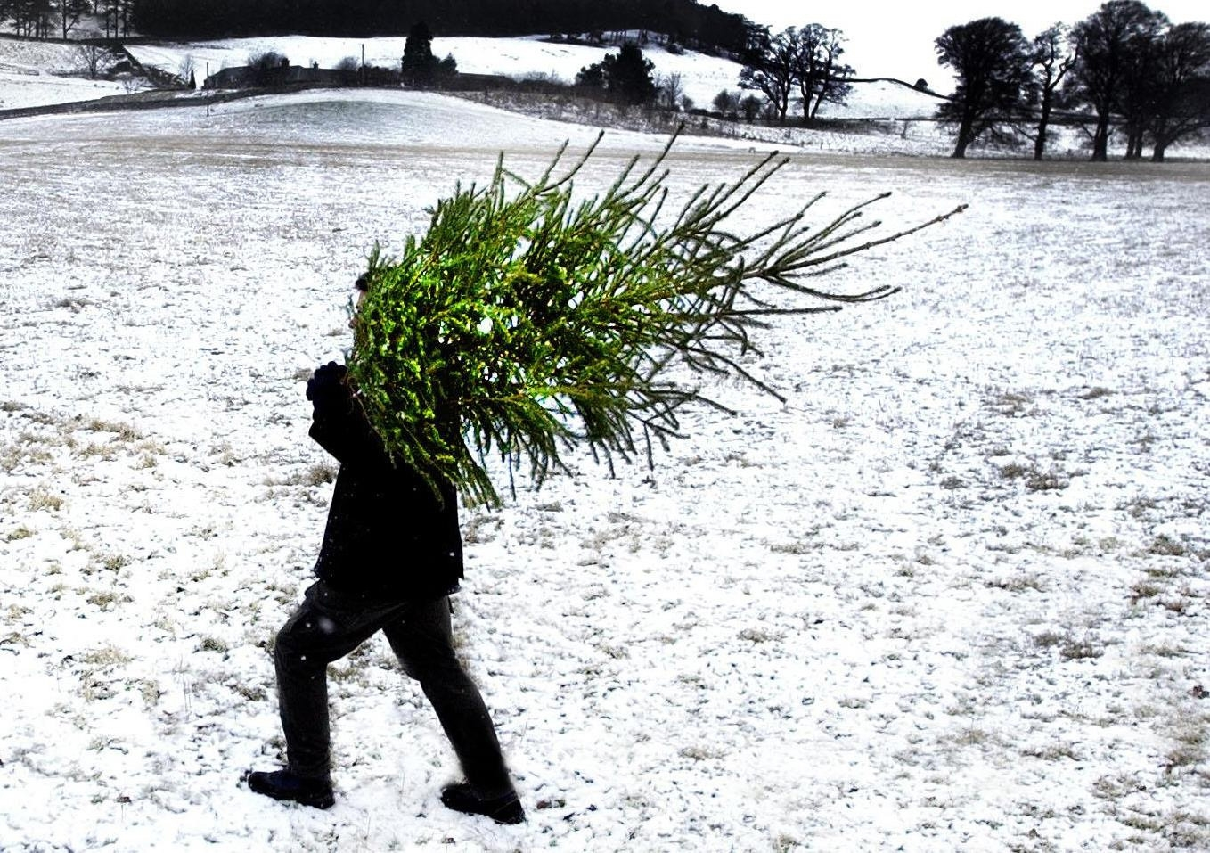 HARD WORK: Hopefully you won't have to carry your tree through the snow like this chap Picture: PA