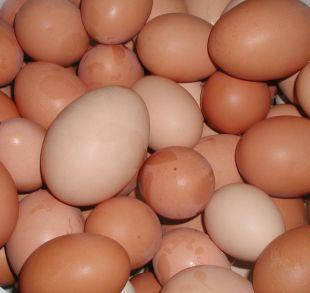 Bridport and Lyme Regis News: Shopkeepers ban youngsters from buying eggs