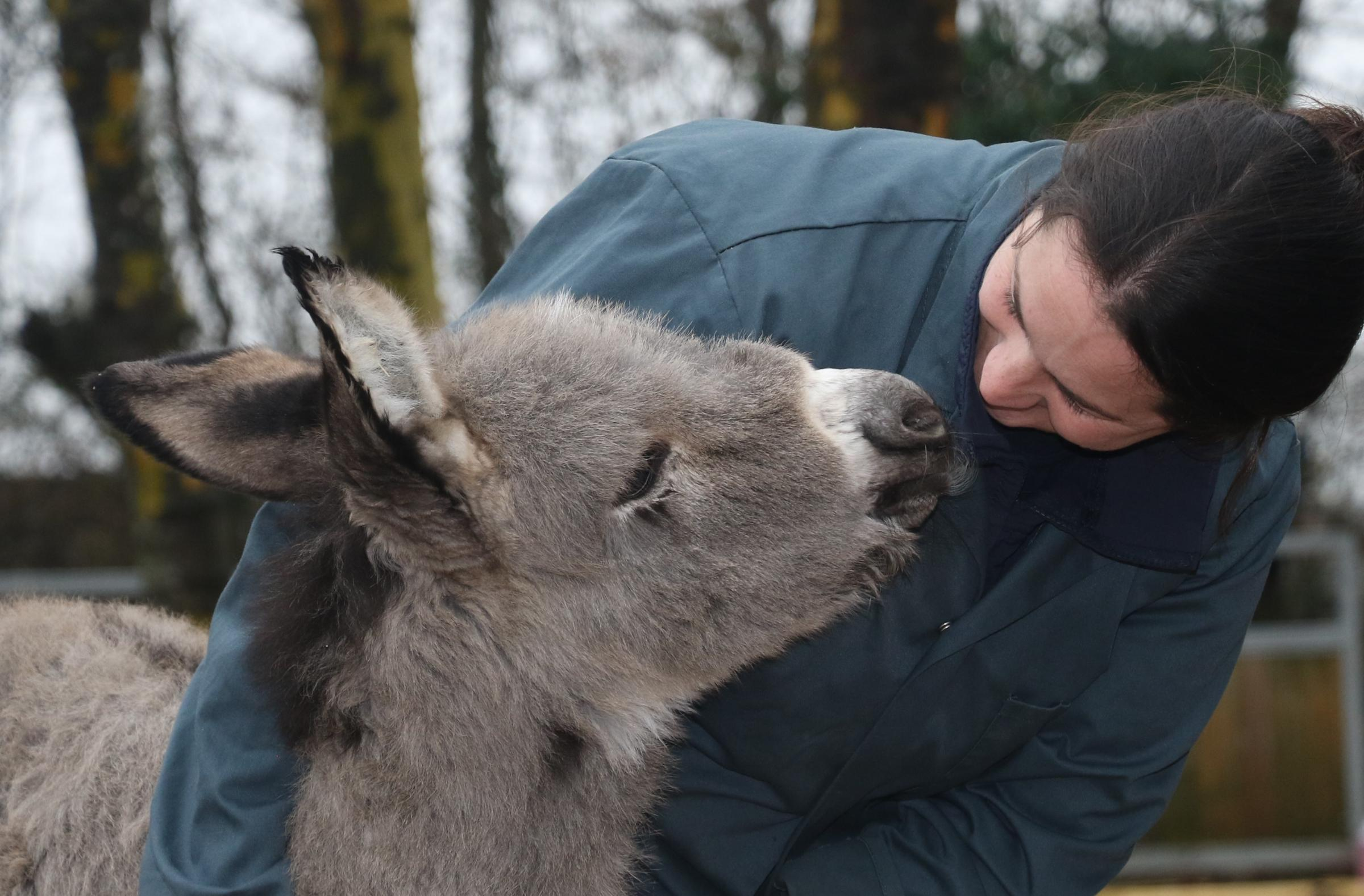 NEW HOME: A week-old foal has found its forever home at The Donkey Sanctuary
